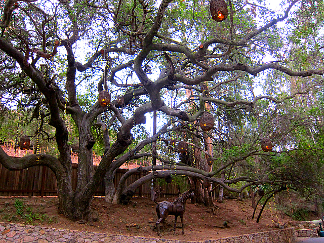 Calamigos Ranch - tree